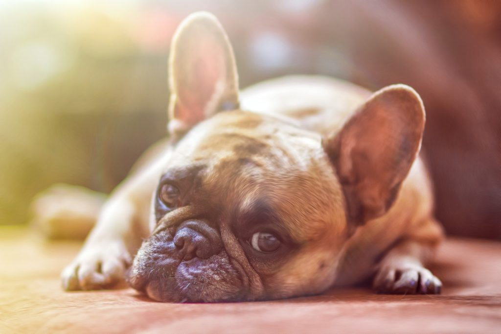 寂しそうな顔をする犬